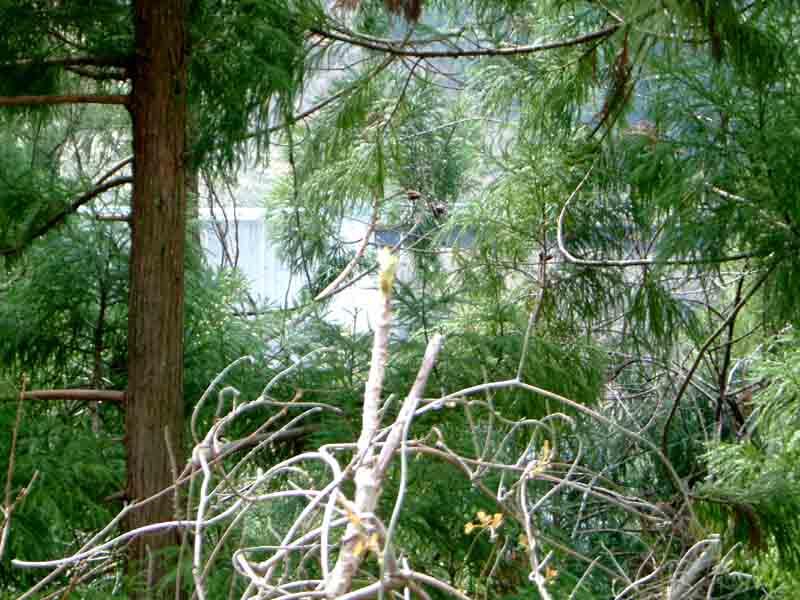 20060408-4.jpg