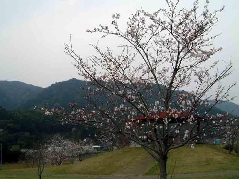 20070401-6.jpg